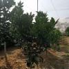 聚乙烯全新料防虫网高密度果树防虫蜂透风防虫网40目专用