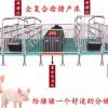 母猪产床 双体产床 塑料保温箱 猪位60厂家现货